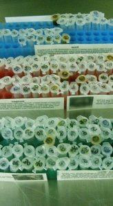 syringe-laboratory-inject-3